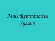 SCI 106 Male Reproductive System OK