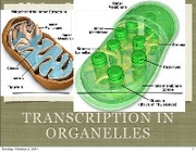 Lecture 11 Trxn in Organelles