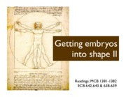 L19 - Getting embryos into shape II - 1 slide