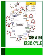 12_Citric Acid Cycle (1)