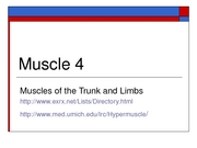 muscle4