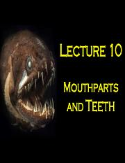 BIOL210_Lecture_10_Mouthparts&Teeth (1).pdf