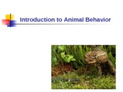 Ethology for Experimental-1