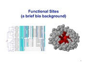 Bioe+144+Functional+site+prediction+-+bio+background.ppt