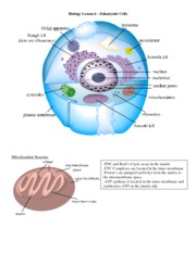 Biology-Lesson-6---Eukaryotic-Cell