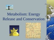 Lecture 8-Metabolism