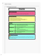 Enzyme Graphing Worksheet Docx Theme Homeostasis 1 2 1 0 8 0 6