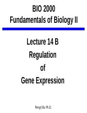 Lecture_14_B_Regulation of Gene Expression.pptx