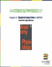 OpenStax_Anatomy_Physiology_CH14_ImageSlideshow.pptx