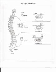 The Types of Vertebrae.pdf