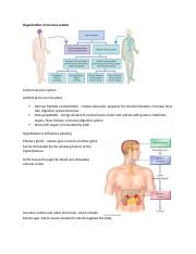 Organization of nervous system.docx