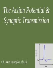 Action Potentials and Synaptic Transmission.pptx
