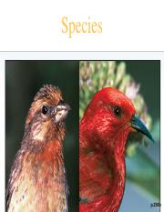 Species (DSU - conflicted copy 2016-10-31 193323).ppt