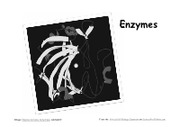 7_Enzymes