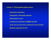 Lect_11__Photosynthesis-I