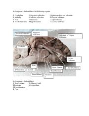Homework 4 Brain dissection