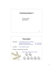 L11 carbohydrates part 2