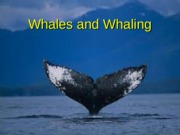 12.Whales_2014.ppt