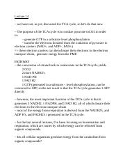 Lecture 14 (TCA, metabolism) (1).docx