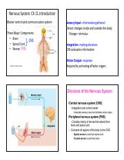 11 Nervous System Intro Ch 11.pdf