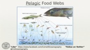 10_FoodWebs