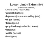 Lower ExtremityFINAL