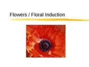 08%20Flowers%20%26%20Induction