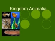 Kingdom Animalia 2012