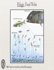 10_FoodWebs(1)
