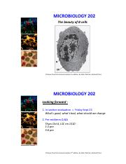 Immunology - B cells and antibodies.pdf