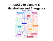 05 Metabolism and Energetics