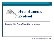 10_from_tree_shrew_to_ape