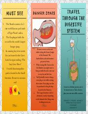 The Digestive System0.pdf