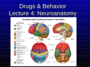 D&B 2141 Lecture 4_Neuroanatomy