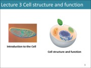 Lecture 3 Cell structure and function
