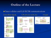 9_1_11_InterCellAndCell-ECMInteractions