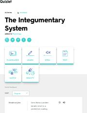 The Integumentary System Flashcards | Quizlet.pdf