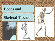 AP 1 CH 6 Lect. PP  Bones and Skeletal Tissues