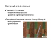 Plant Growth Development