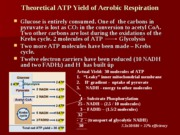 Theoretical ATP Yield of Aerobic Respiration