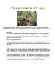The-Importance-of-Fungi