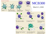 MCB300 Spring 2008 Lecture 7 Intro to Infectious Diseases  Extra slides Handout