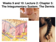 Z331 Fall 2010 Ecampus Week 9 and 10 Integument Lecture 2 Dermis Posted