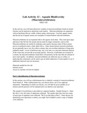 Lab Activity 12 worksheet
