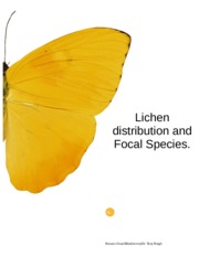 lichen distributuion and focal species