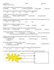 A and P Test 7 Blank