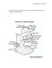 Pre-lab Assignment_Microscopy 1.docx
