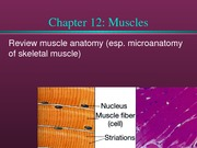 Chapter 12 Muscles