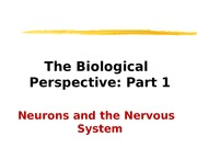 4 The Biological Perspective Part 1 student version