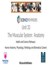 Unit 33_The Muscular SystemAnatomy.pptx